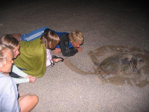 havskildpadder tyrkiet